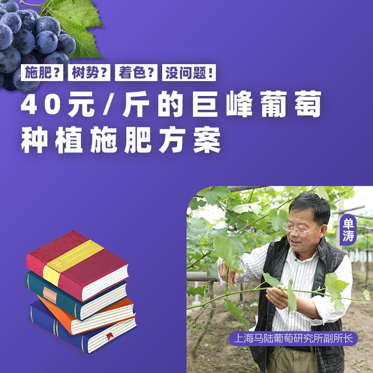 40斤的巨峰葡萄!.jpg