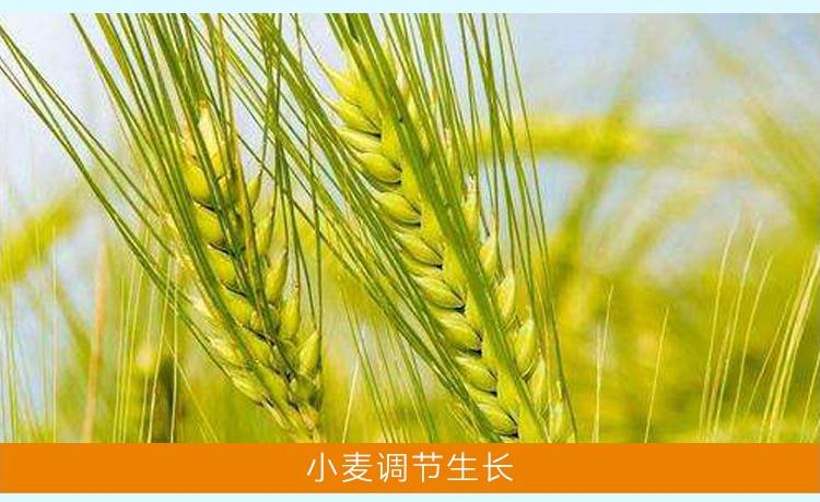 24-表芸苔素内酯_05.jpg